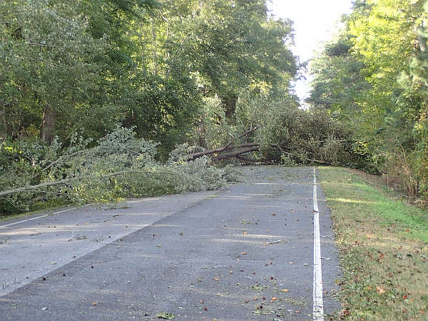 trees down, not going anywhere today